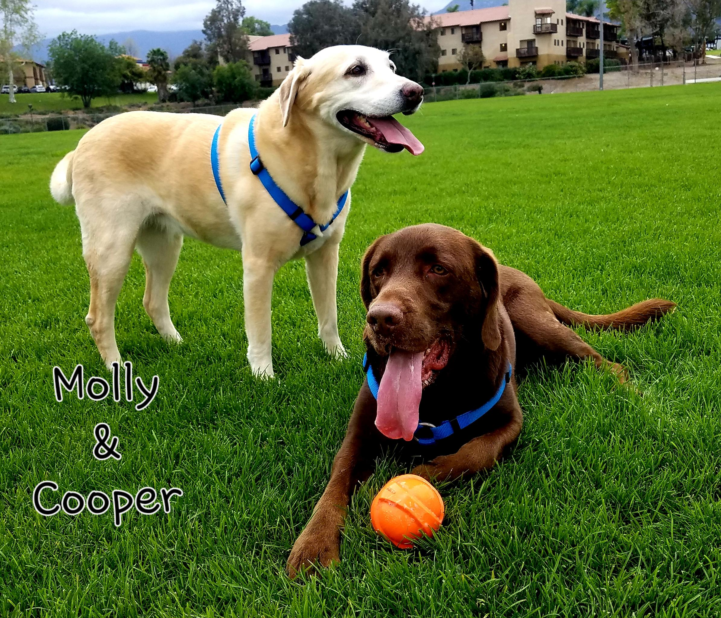 molly and cooper.jpg